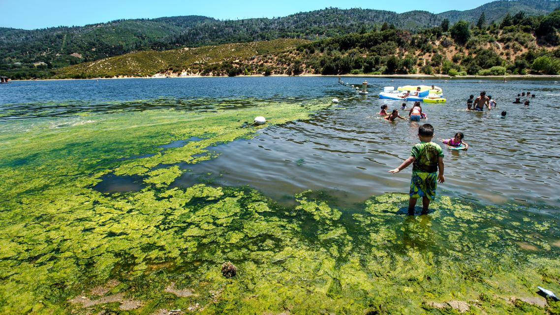 Children play in water infested with blue-green algae at Silverwood Lake in San Bernardino County.