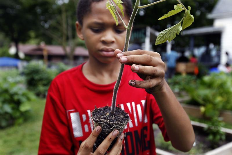 Emmanuel Johnson, 12, prepares the roots of a vegetable for planting.