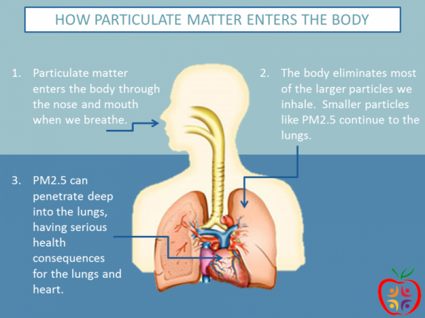 Particulate matter or particle pollution is a combination of solid particles and liquid droplets that are small enough to reach the small airways in the lungs, potentially causing damage. IMAGE BY THE UTAH DEPARTMENT OF HEALTH