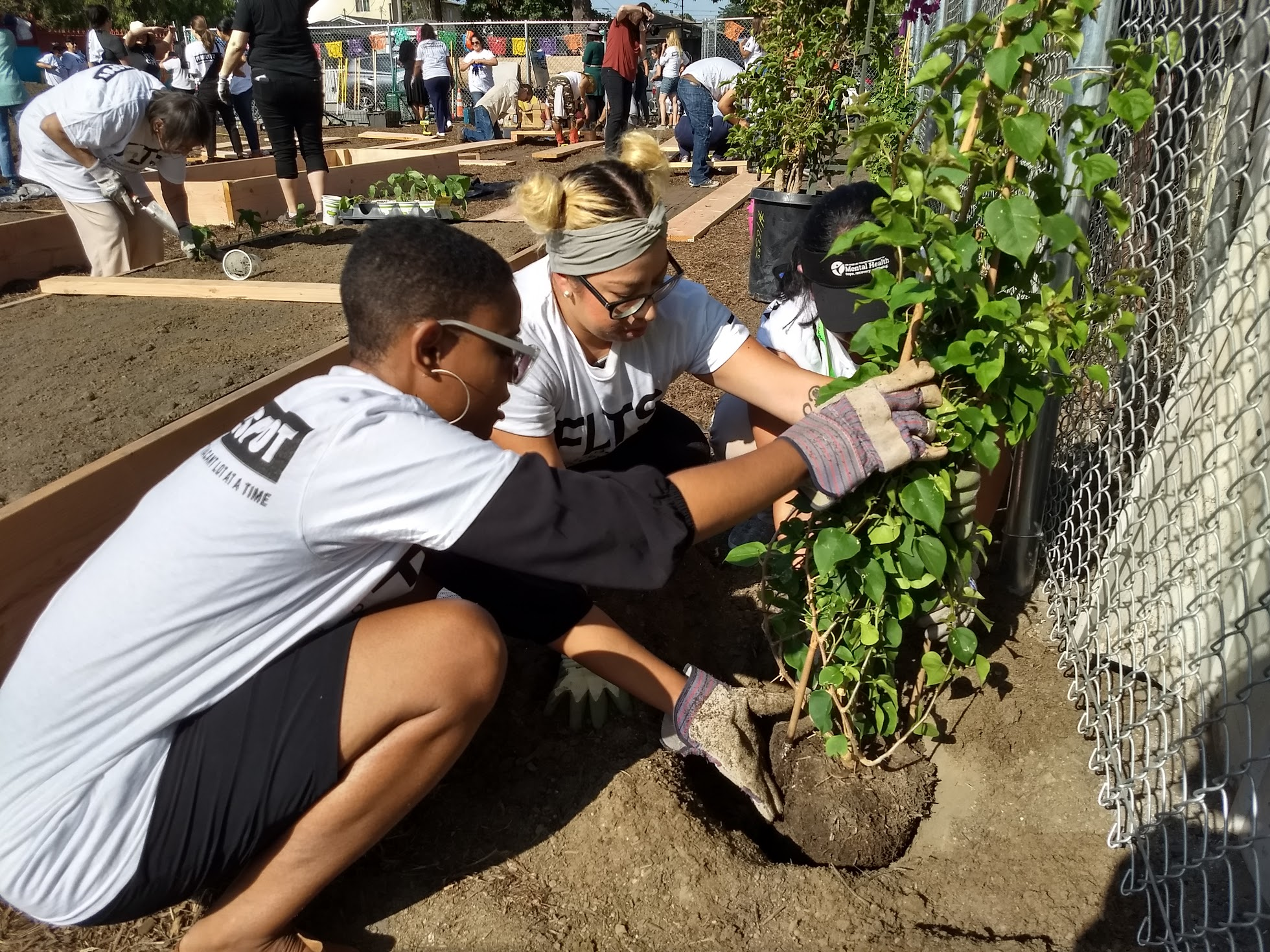 Can Urban Greening Improve Mental Health L A County Tries New