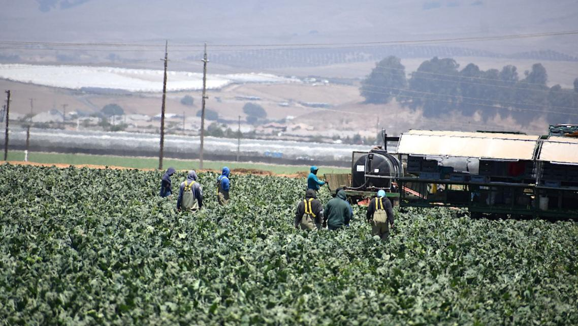 Agricultural workers in Santa Barbara County.