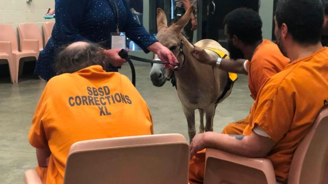 Rusty, a miniature donkey and certified therapy animal, visits inmates in a mental health therapy session.