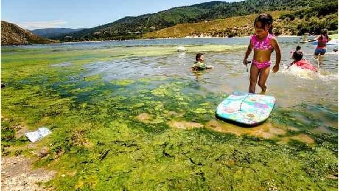 Children play in water infested with blue-green algae