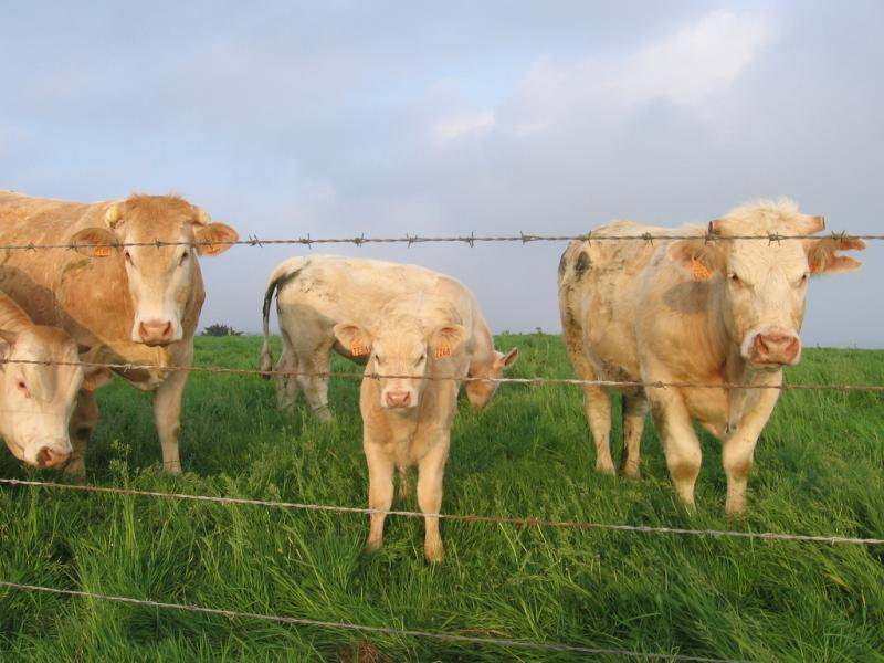 daily briefing, reporting on health, health journalism, mad cow disease