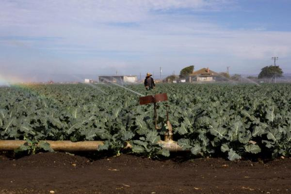 More than 90,000 farmworkers living in the Salinas and Pajaro Valley region earn an average of $17,500 a year. Yet, Salinas is one of the most expensive places to live in the U.S. SEBASTIÁN HIDALGO FOR THE SALINAS CALIFORNIAN AND CATCHLIGHT.IO