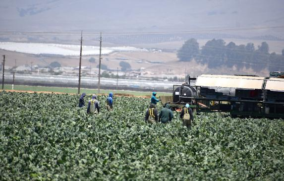 Local agricultural workers have been on the job, in person, throughout the pandemic